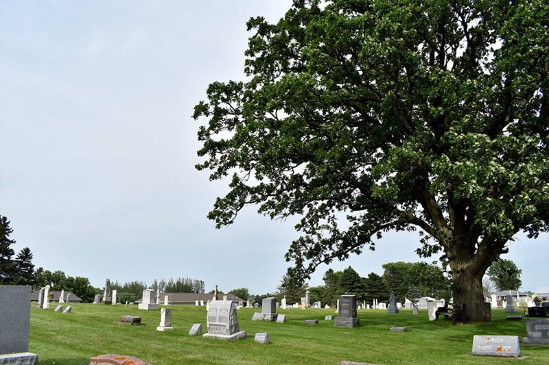 Tree at the Burr Oak Cemetery
